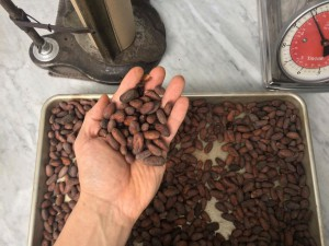 cacao roasted