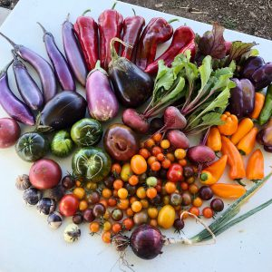 Bird's eye view of white table covered in colorful veggies.