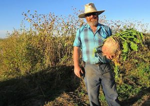 Doug Wiley stands with a large root vegetable