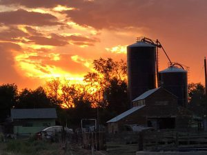 the silos of larga vista silhouetted in front of a beautiful sunset